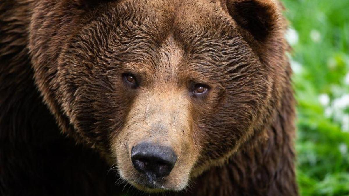 Was tun, wenn man einen Bären trifft?