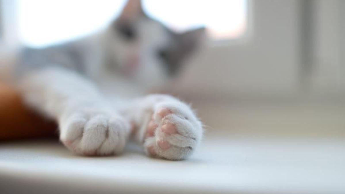 Katze positiv auf Coronavirus getestet