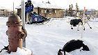 Mehrere Teams mit Hundeschlittengespannen brachten den Diphterie-Impfstoff, der in Kaninchenfell eingepackt war, nach acht Tagen und ca. 1100 Kilometern rechtzeitig nach Nome.