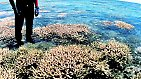 Schon geringe Erhöhungen der Wassertemperatur und des Säuregehalts der Meere durch den globalen Klimawandel gefährden die sensiblen Riffe mit ihrer komplexen Lebenswelt.