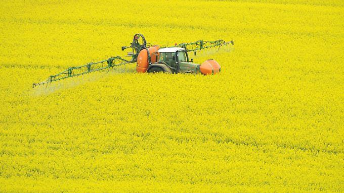 Ein Traktor spritzt Pflanzenschutzmittel auf ein Feld mit Winterraps: Pestizide sind laut einer Studie hochgradig gefährlich für den biologischen Lebensraum von Amphibien.