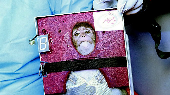 Das soll der Affe nach der Rückkehr sein.