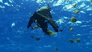 Plastik statt Plankton: Müll-Kontinente treiben im Meer