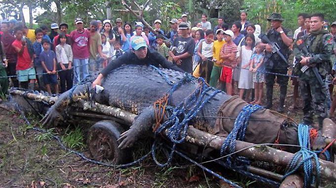 Im September 2011 war Lolong im Agusan-Sumpf auf Mindanao gefangen worden.