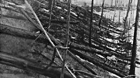 Das Tunguska-Ereignis: Der Ort der Katastrophe wurde erst bei einer Expedition fast 20 Jahre nach der Asteroiden-Explosion entdeckt.