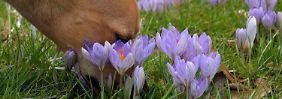 Der trübste Winter seit 1951 endet: Jetzt kommt der Frühling