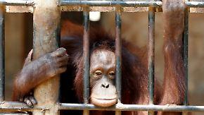 40 Jahre Artenschutzabkommen: Schmuggel bedroht Tiere