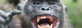 Jährlich 3000 Tiere: Affen fallen Wilderern zum Opfer