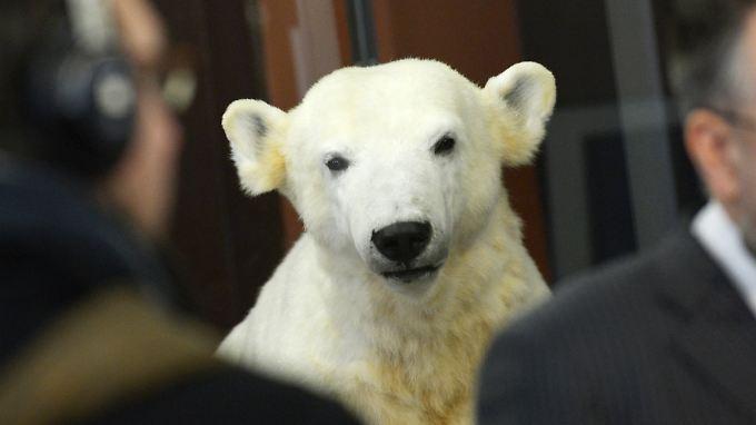 Seit Februar steht eine Plastik von Knut im Berliner Naturkundemuseum.