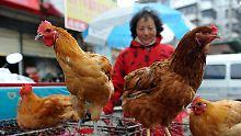 Neue Variante der Vogelgrippe: Menschen sterben an H7N9