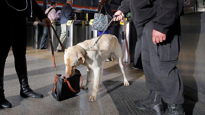 Die Polizei in Boston sucht mit Hunden nach weiteren Bomben.