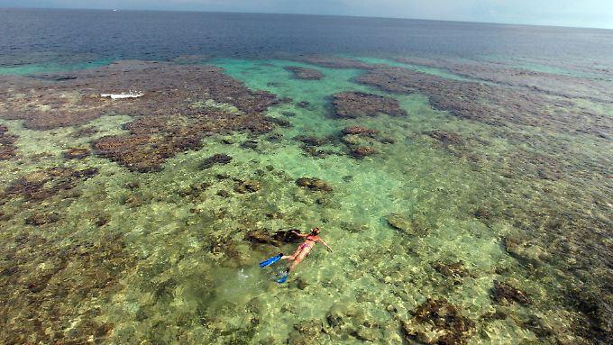Der Klimawandel gefährdet die Korallenriffe.