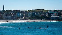 Der Mann lebt schon in Bondi, das für seinen Strand berühmt ist.