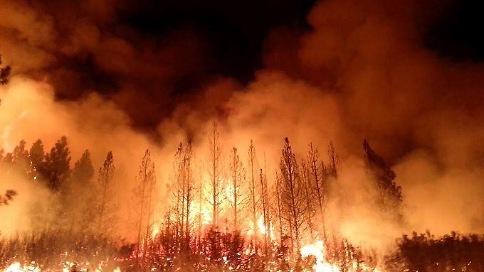 Die von der Hitze und einem regenarmen Winter ausgedörrten Bäume in der Region brennen lichterloh.