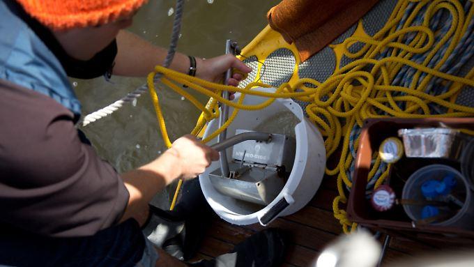"""An Bord des Forschungsschiffs """"Aldebaran"""" entnimmt ein Student eine Bodenprobe aus der Elbe. Das wissenschaftliche Projekt """"Plarimar"""" untersucht Partikel von Plastikmüll in norddeutschen Flüssen und dem Wattenmeer."""