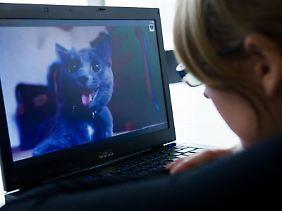 Katzenvideos statt Tabellenkalkulation:Unterhaltsame Ablenkung ist im Netz oft nur einen Mausklick weit entfernt.