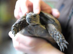 Schildkröten können bei guter Haltung sehr alt werden.