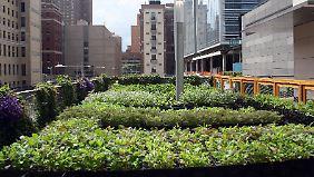 Auch in Weltmetropolen in Paris - oder hier New York - erfreut sich Urban Gardening großer Beliebtheit.
