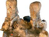 Die Brustwirbel des Krokodilsauriers sind vollständig verwachsen.