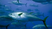 """""""Vielen steht das Wasser bis zum Hals"""": Welchen Fisch man noch essen darf"""