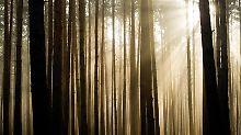 Anleger schielen auf den Wald. Doch der ist schwer zu kaufen.