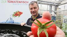 """Cleverer Kampf gegen den Hunger: """"Tomatenfisch"""" soll die Welt ernähren"""