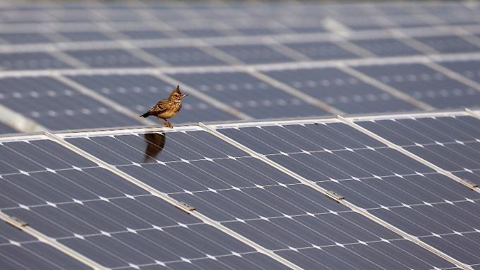Nach einem schwierigen Jahr 2013 könnten der deutschen Solarbranche 2014 im Ausland Flügel wachsen.