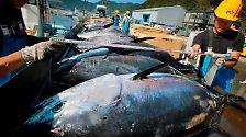 Wundermittel gegen Überfischung?: Warum Aquakultur oft einen Haken hat