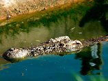 Große Gefahr für Fischer: Krokodil im Lake Victoria.