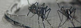 Dengue-Fieber in Brasilien: Deutsche WM-Spielorte sind Risikogebiete
