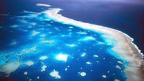Naturparadies stirbt langsam: Great Barrier Reef verliert seinen Glanz