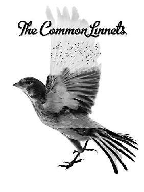 Der Gemeine Zeisig - ein wunderhübscher Singvogel aus der Familie der Finken.