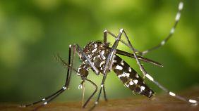 Dengue in deutschen WM-Spielorten: Mannschaftsarzt verschreibt Mückenmittel