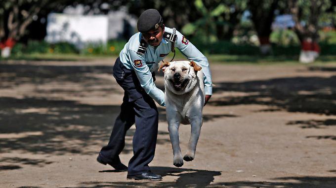 """Polizeihunde sollen sie nicht ersetzen, aber die Straßenhunde, die nun ausgebildet werden, könnten einfache Aufgaben übernehmen. Beamte sprechen von """"freundlichen Helfern"""" auf Straßen und Märkten."""