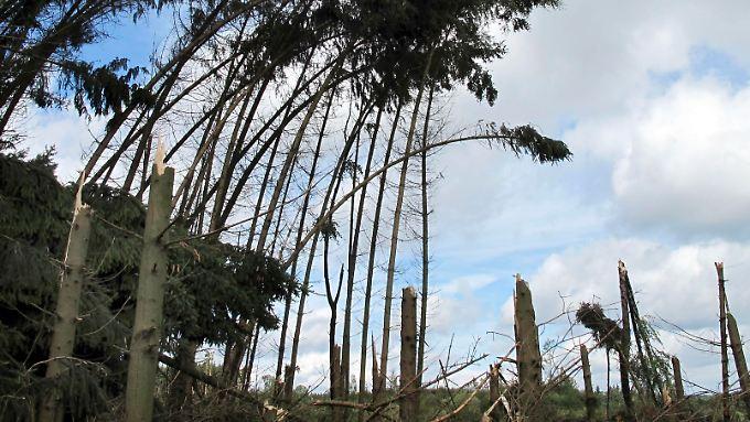 Dächer abgedeckt, Bäume umgestürzt: Tornados richten Millionenschäden an