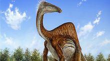 Riesige Pranken: Rätsel um mysteriösen Dinosaurier gelöst