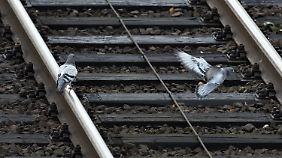Bald dreitägiger Streik?: GDL will Bahn und Industrie lahmlegen