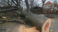 Wenn ein solcher Koloss kippt, bleibt Autofahrern keine Chance: Diesen Baum hat der Sturm inWernigerode (Sachsen-Anhalt) gefällt.