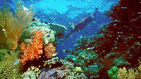 Gute Nachricht des Tages: Größtes Meeresschutzgebiet der Welt