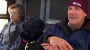 Tierischer Schwarzfahrer: Hund Eclipse fährt gerne ohne Herrchen Bus