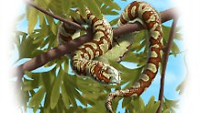 Älteste Fossilien gefunden: Schlangen gibt es schon seit 170 Mio Jahren