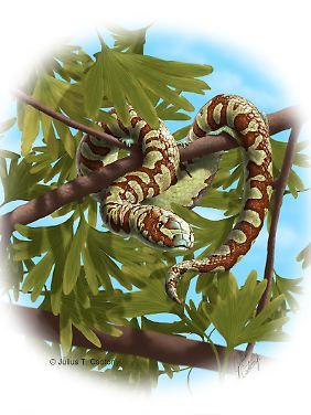 Illustration einer Schlange der Gattung Portugalophis lignites aus der Kreidezeit.