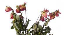 Frage & Antwort, Nr. 369: Hilft Blumenfrisch wirklich?