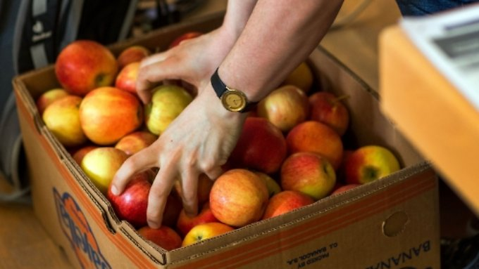 Resultat der Russland-Sanktionen: Bauern bleiben auf Apfelernte sitzen