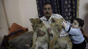 Raubtiere als Schmusekatzen: Familie im Gazastreifen kauft Zoo Löwenbabys ab