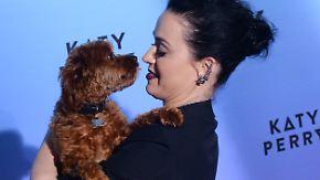 Promi-News des Tages: Katy Perry twittert versehentlich Handynummer