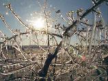 Frage & Antwort, Nr. 376: Kann Eis Blüten vor Frost schützen?