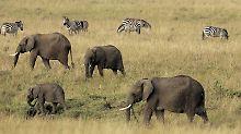 Stichwort: Serengeti
