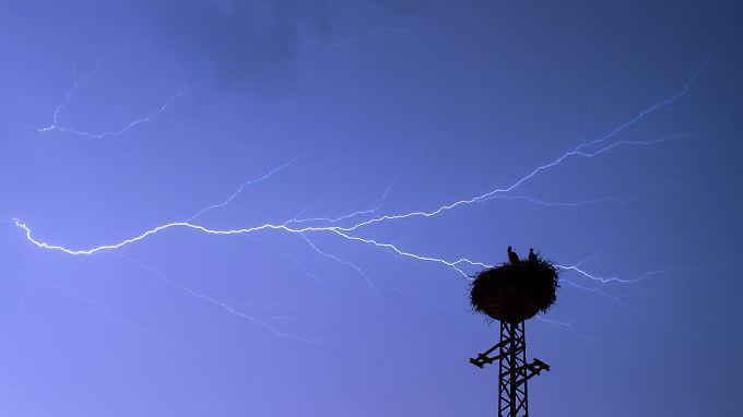 Auch Storchennester werden von Blitzen nicht verschont. Jedes Jahr kommen dadurch rund drei Prozent der Jungvögel ums Leben.
