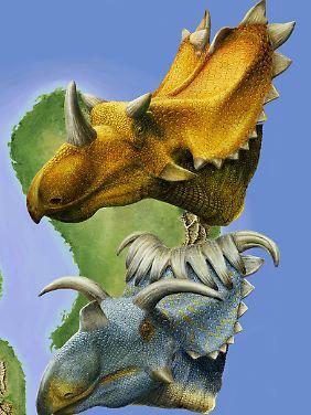 Utahceratops gettyi (oben) und Kosmoceratops richardsoni in der Rekonstruktion.